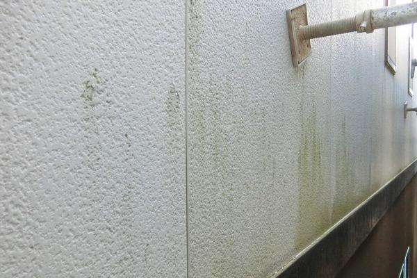 外壁塗装(コケ・汚れ)