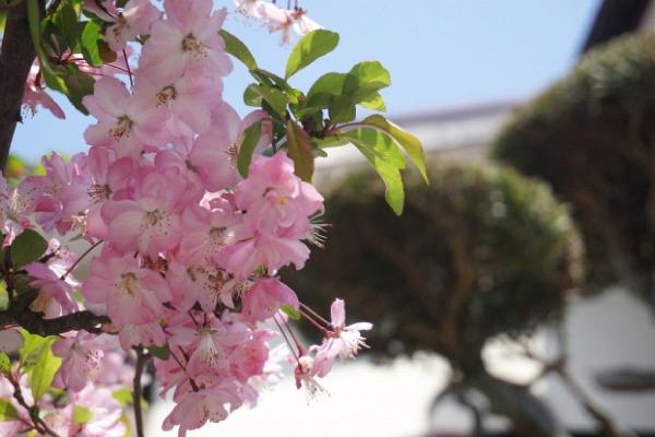 屋根塗装に適した季節は春・秋が最適